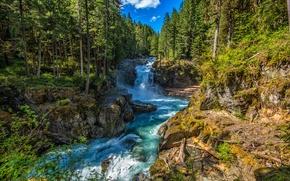 Обои лес, лето, солнце, деревья, ручей, камни, течение, водопад, Вашингтон, США, Silver Falls, Ohanapecosh