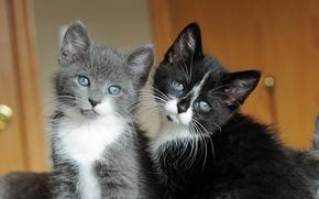 Обои усы, глазки, котята, милые, мордашки