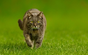 Обои трава, кот, зеленый, фон, котэ