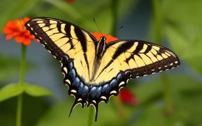 Картинка узор, бабочка, крылья, насекомое, мотылек