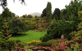 Картинка зелень, трава, деревья, цветы, поляна, сад, Канада, кусты, Vancouver, Van Dusen Gardens