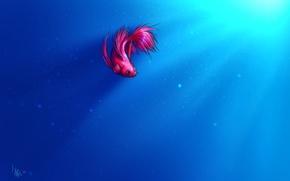 Обои свет, пузырьки, фон, рыбка, рыба, арт, петушок, oomizuao