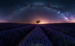 Обои лаванда, дерево, вечер, ночь, поле, млечный путь, небо, звезды