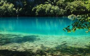 Картинка вода, рыбы, природа, озеро, голубая, Plitvice Lake
