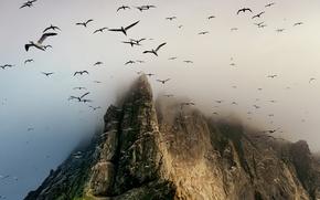 Картинка птицы, скала, гора, Scotland, St. Kilda archipelago, Boreray Island