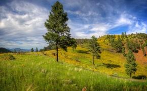 Картинка трава, деревья, горы, холмы