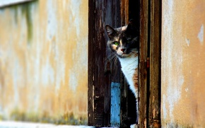 Обои кот, стена, Дверь