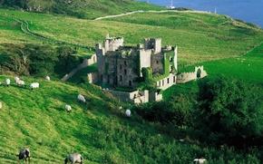 Картинка море, трава, деревья, замок, овцы, склон, развалины
