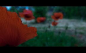 Картинка небо, трава, деревья, дом, настроение, Цветы, grass, sky, trees, fujifilm xq2, кинематогафический стиль, flowers маки