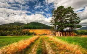 Обои трава, лес, природа