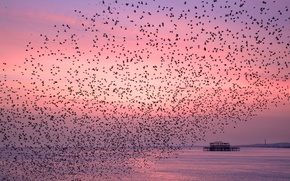 Картинка небо, птицы, природа, рассвет
