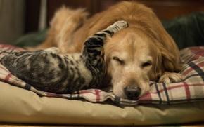 Картинка кошка, фон, собака, дружба