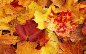 Обои листы, осень, желтый