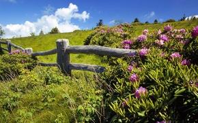 Картинка лето, небо, поляна, зеленая, цветы., изгородь