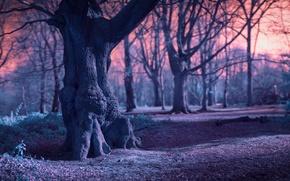 Картинка ветки, дерево, Лес, старое