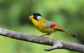 Картинка птицы, природа, птица, ветка, птичка