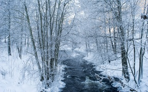 Картинка river, trees, winter, snow, branches, frosty