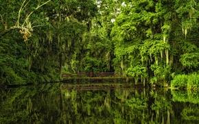 Картинка вода, деревья, мост, отражение, Южная Каролина, Charleston, South Carolina, Magnolia Gardens, Чарлстон, Сады магнолий