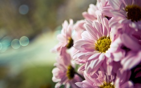 Картинка цветы, flowers, широкоэкранные, размытие, HD wallpapers, обои, полноэкранные, flower, background, fullscreen, макро, широкоформатные, фон, macro, ...