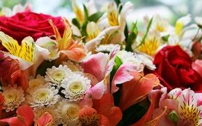 Картинка роза, букет, цветник, цветочное ассорти