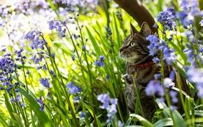 Обои кошка, природа, цветы, колокольчики
