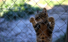 Картинка кот, усы, забор, лапки, кошак, котяра