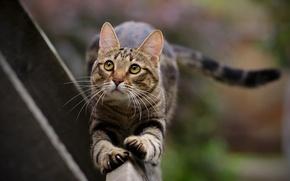 Картинка кот, усы, лапы, хвост