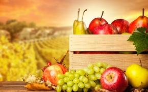 Картинка урожай, фрукты, груши, ящик, яблоки, виноград, осень