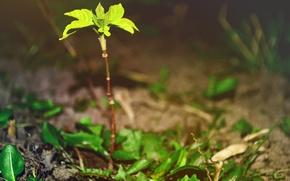Картинка зелень, макро, деревья, природа, пальма, тепло, дерево, весна