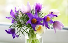 Картинка цветы, букет, фиолетовые, ваза, розовые, прострел, Pulsatílla