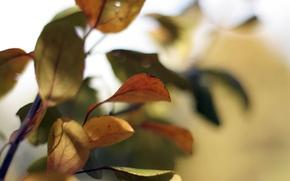 Обои дерево, природа, ветки, листья