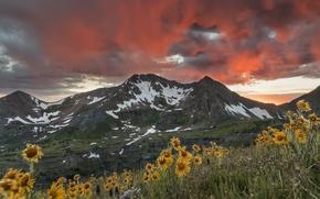 Картинка закат, горы, небо.цветы