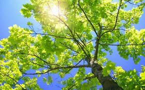 Картинка ветки, природа, листва, ствол, зелёное дерево