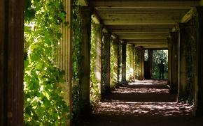 Картинка зелень, листья, свет, тень, силуэт, колонны, Тонель