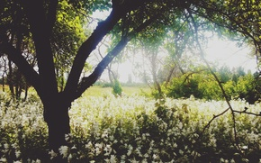 Картинка nature, trees, landscape, summer, garden