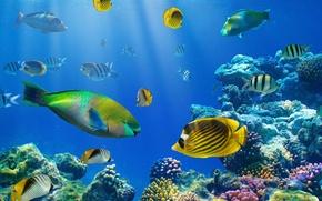 Картинка рыбки, океан, подводный мир, underwater, ocean, fishes, tropical, reef, coral, коралловый риф