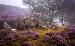 Картинка деревья, природа, камни, растительность, валуны, England, вереск, Derbyshire, Peak District