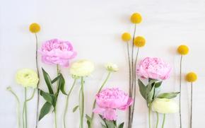 Картинка цветы, нежность, Flowers, pink