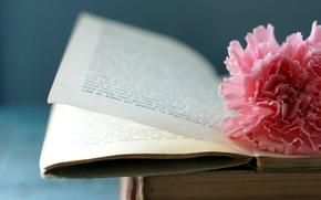 Картинка цветок, макро, книга, страницы