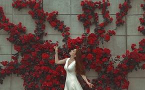 Картинка девушка, цветы, лицо, поза, стена, платье