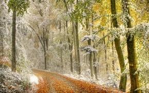 Картинка дорога, осень, лес, листья, снег, деревья, дымка