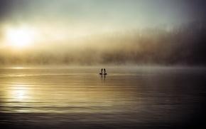 Картинка туман, озеро, лебеди