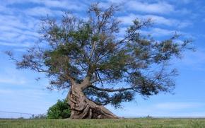 Картинка небо, трава, облака, корни, дерево