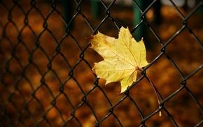 Картинка осень, макро, желтый, фон, сетка, обои, размытие, ограждение, листик, wallpaper, листочек, широкоформатные, background, macro, полноэкранные, ...