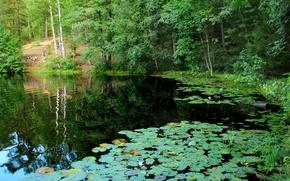 Картинка природа, озеро, фото, Санкт-Петербург, Россия, кувшинки, Комарово, Дружинное