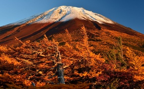 Картинка осень, небо, деревья, Япония, склон, гора Фудзияма