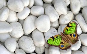 Картинка камни, бабочка, colorful, butterfly, design by Marika, white stones