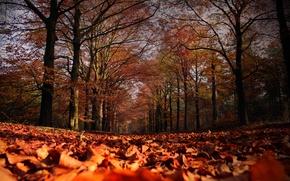 Картинка осень, листья, деревья, листопад, Autumn