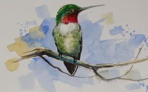 Обои животные, птица, клюв, акварель, обыкновенный архилохус, обыкновенный колибри