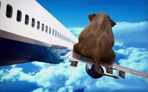 Картинка небо, полет, самолет, слон, крыло, арт